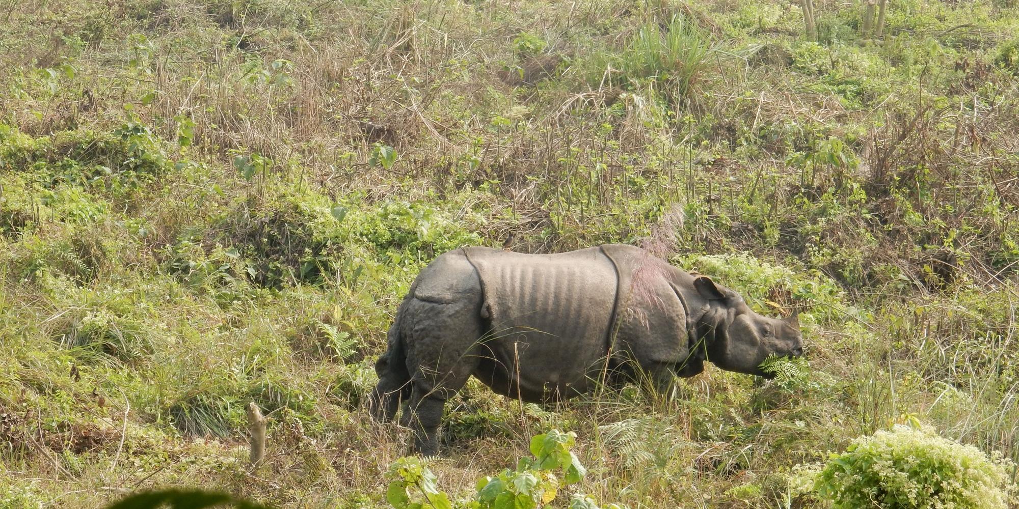 Chitwan National Park-02 Days